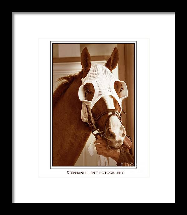 Horse Framed Print featuring the photograph Ready To Race by Stephanie Hayes