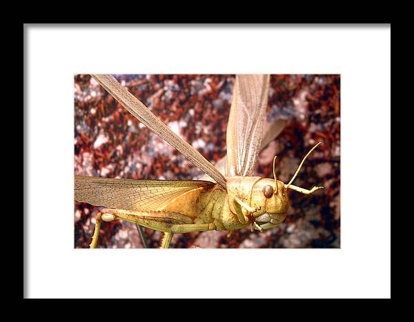 Jez C Self Framed Print featuring the photograph Ready To Swarm by Jez C Self