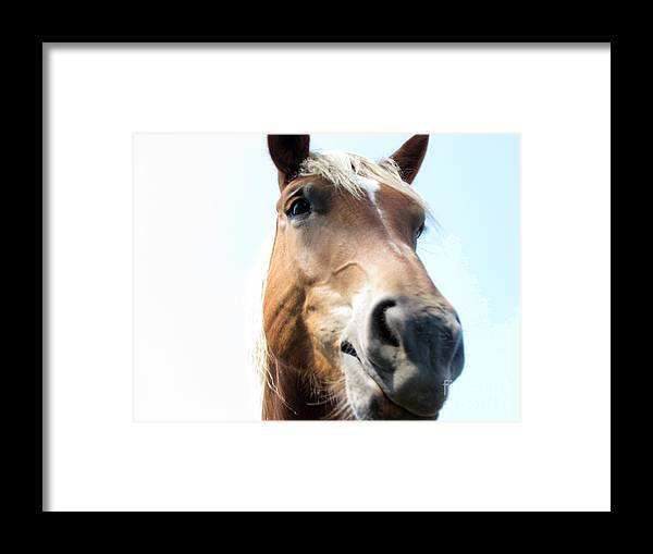 Horse Framed Print featuring the photograph Really by Amanda Barcon