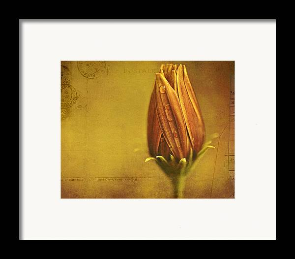 Floral Art Framed Print featuring the photograph Recollection by Bonnie Bruno