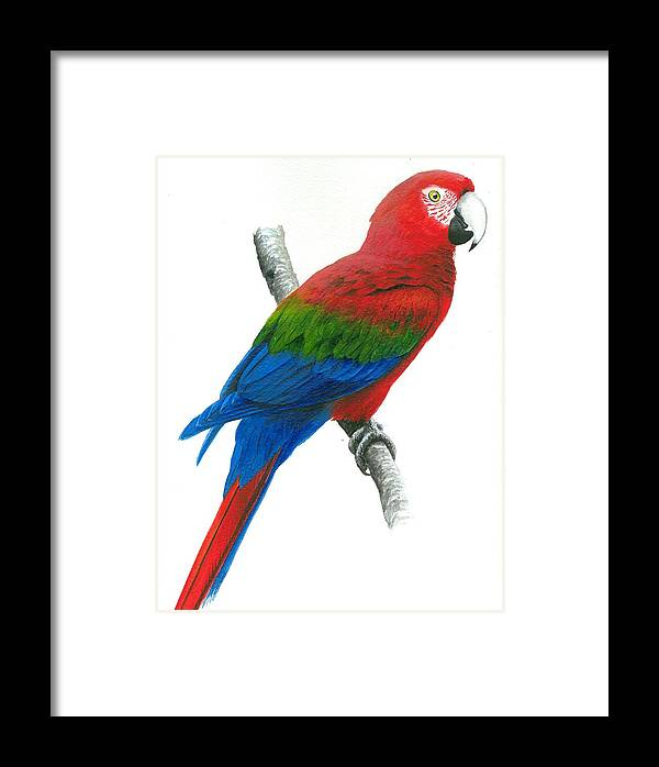 Chris Cox Framed Print featuring the painting Red And Green Macaw by Christopher Cox
