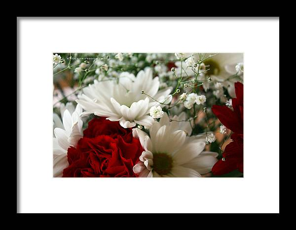 Daisy Framed Print featuring the photograph Red And White by KatagramStudios Photography