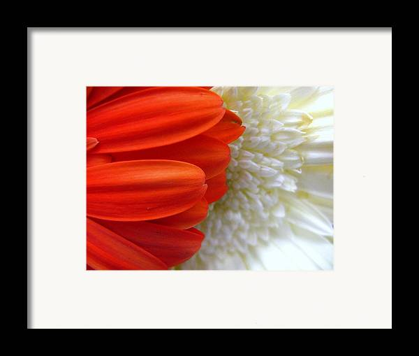 Flowers Framed Print featuring the photograph Red And White by Rhonda Barrett