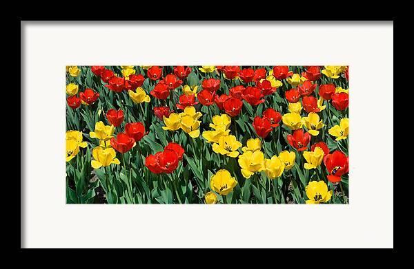 Red Framed Print featuring the photograph Red And Yellow Tulips Naperville Illinois by Michael Bessler