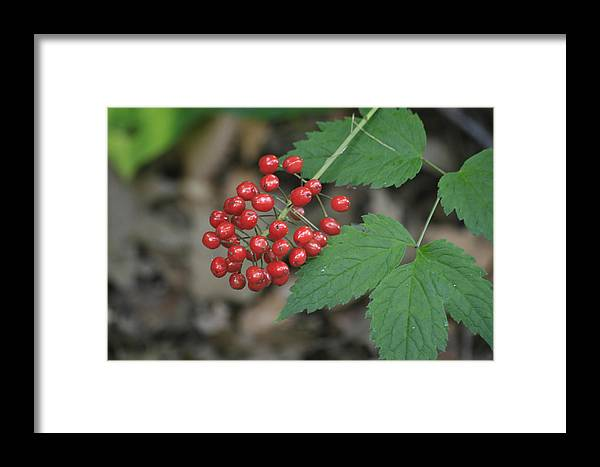 Landscape Framed Print featuring the photograph Red Bead by Alan Rutherford
