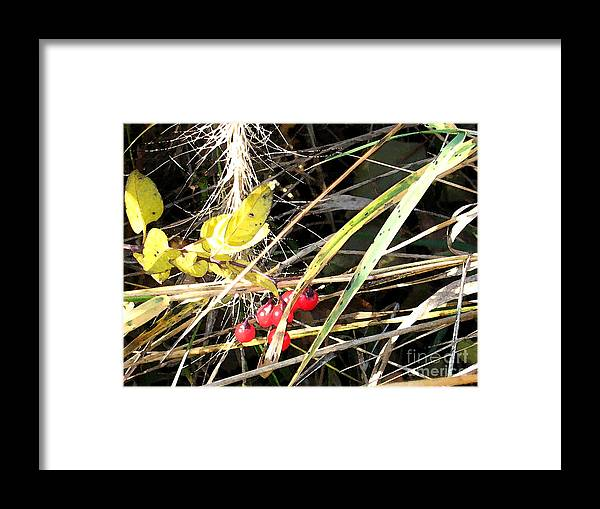 Berries Framed Print featuring the photograph Red Berries by Gary Everson