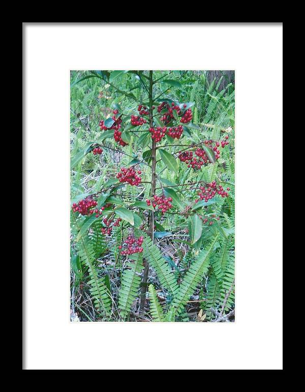 Photograph Framed Print featuring the photograph Red Berries by Tara Kearce
