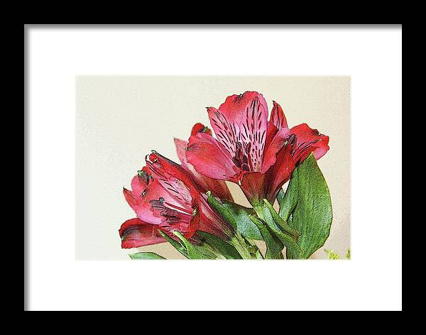Flowers Framed Print featuring the photograph Red Blooms Poster Art by Margie Avellino