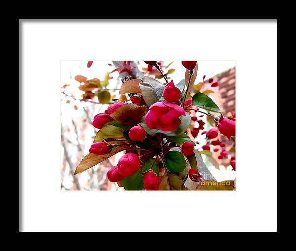 Blossoms Framed Print featuring the photograph Red Blossom by Mioara Andritoiu