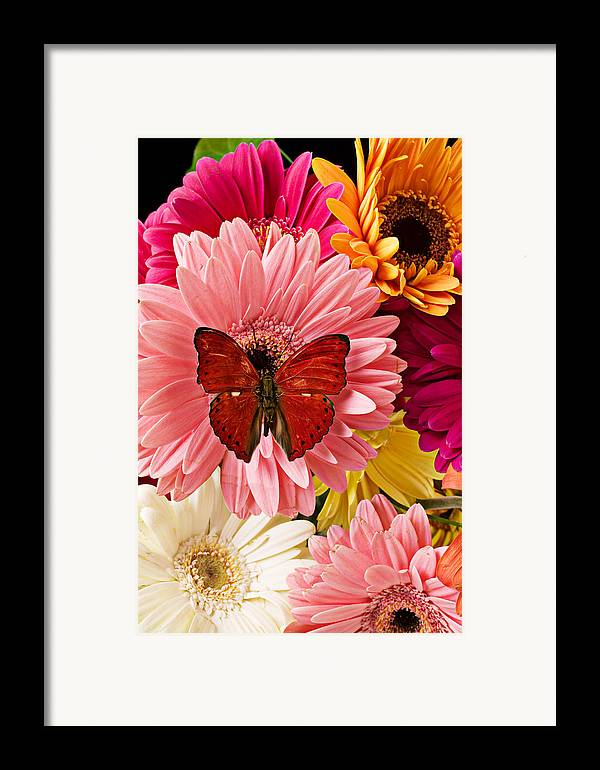 Butterfly Daisy Wings Flower Flowers Petal Petals Floral Framed Print featuring the photograph Red Butterfly On Bunch Of Flowers by Garry Gay