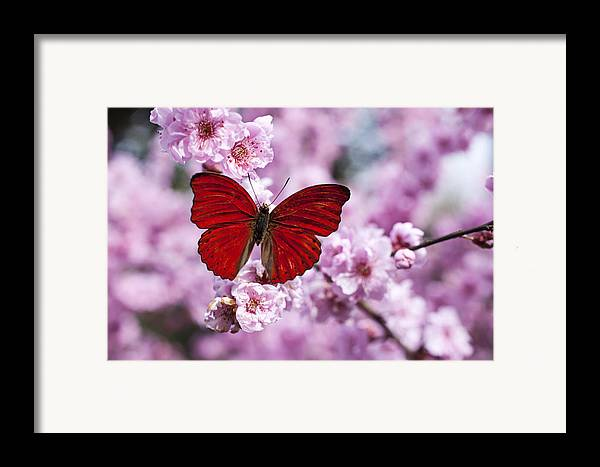 Red Framed Print featuring the photograph Red Butterfly On Plum Blossom Branch by Garry Gay