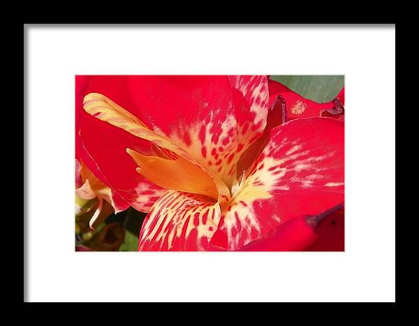 Macro Photography Framed Print featuring the photograph Red Canna Lily by Sheri McLeroy