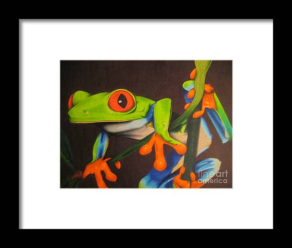 Frog Framed Print featuring the drawing Red Eye Tree Frog by Brian Schuster
