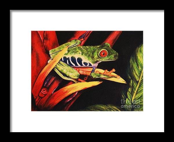 Red Eyed Framed Print featuring the drawing Red Eyed Tree Frog by Jamey Balester
