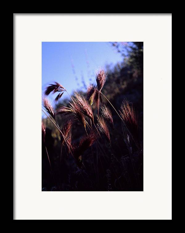 Nature Framed Print featuring the photograph Red Feathers by Randy Oberg