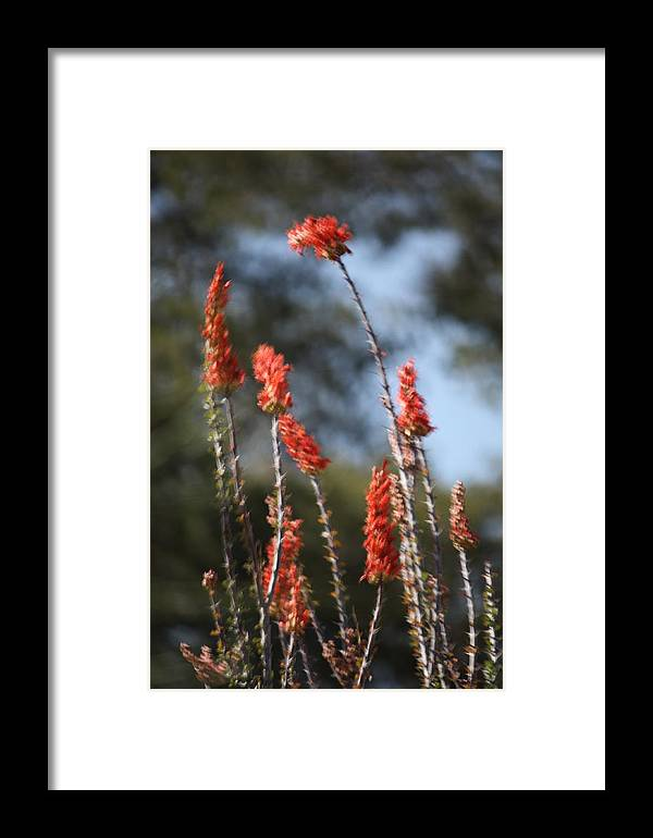 Photography Framed Print featuring the photograph Red Flowers In Clouds by Marsha L Power