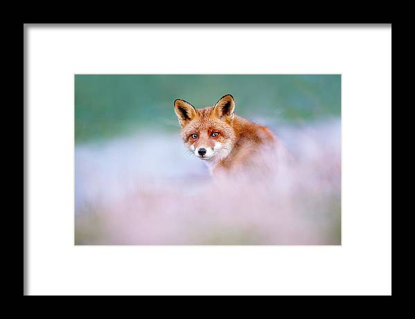 Red Fox Framed Print featuring the photograph Red Fox in a Mysterious World by Roeselien Raimond