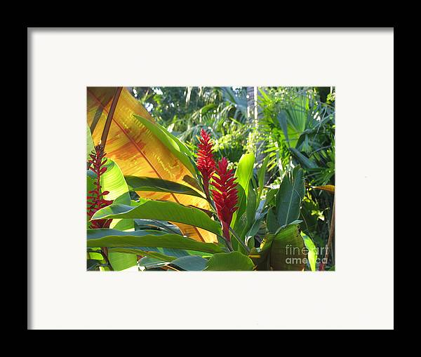 Red Framed Print featuring the photograph Red Ginger by Stephanie Richards