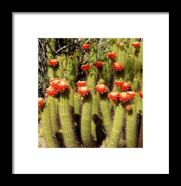 Cactus Framed Print featuring the photograph Red Hats by Jeanette Oberholtzer