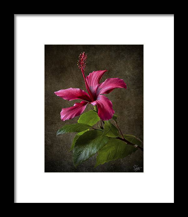Red Hibiscus Framed Print featuring the photograph Red Hibiscus by Endre Balogh
