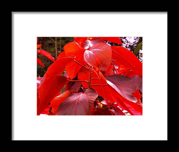 Red Framed Print featuring the photograph Red by Ian MacDonald
