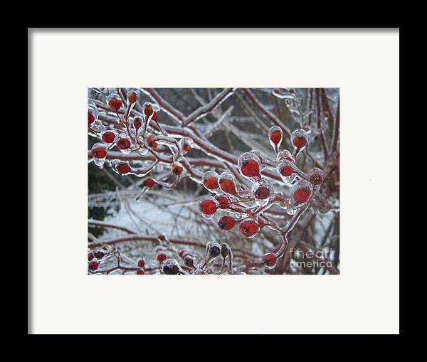 Berries Red Ice Storm Framed Print featuring the photograph Red Ice Berries by Kristine Nora
