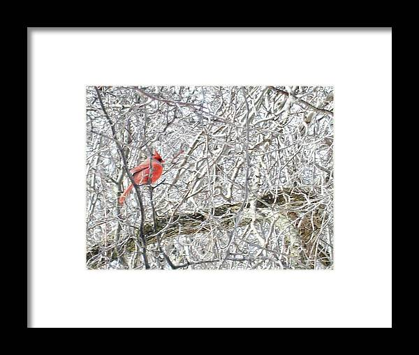 Bird Framed Print featuring the photograph Red In White by Justin Randy