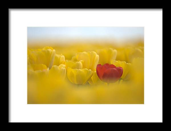 Flower Framed Print featuring the photograph Red In Yellow L085 by Yoshiki Nakamura