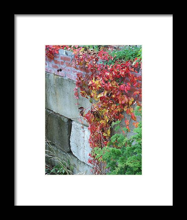 Red Leaves Framed Print featuring the photograph Red Ivy by Gene Ritchhart
