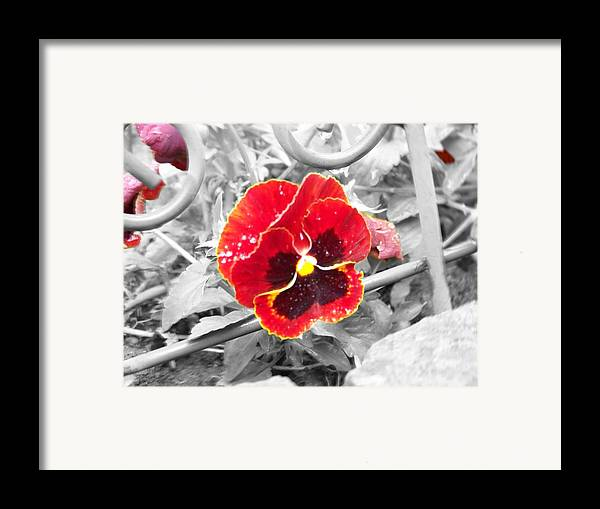 Flowers Framed Print featuring the photograph Red by Jessica Burgett