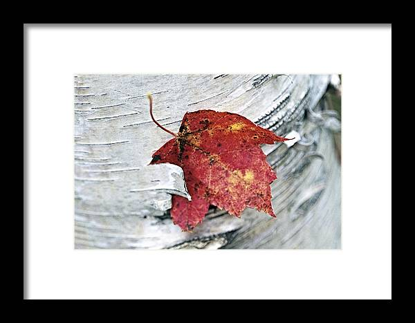 Abstract Framed Print featuring the photograph Red Leaf by George Oze
