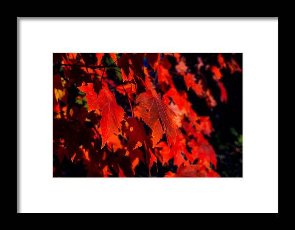 Fall Framed Print featuring the photograph Red Leaves by Angela Sherrer