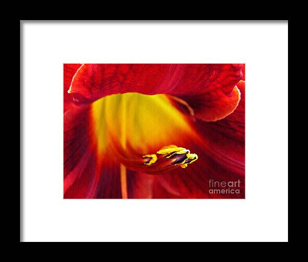 Lily Framed Print featuring the photograph Red Lily Center 4 by Sarah Loft
