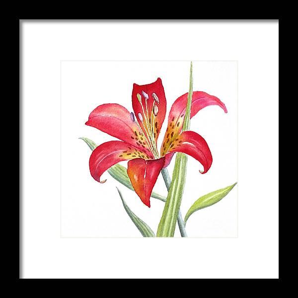 Lily Framed Print featuring the painting Red Lily by Deborah Ronglien