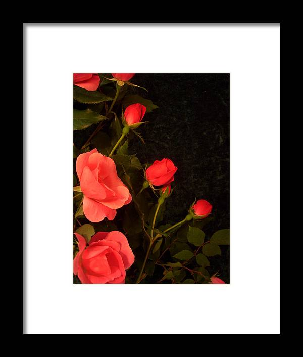 Red Roses Soddenly Appears. Framed Print featuring the photograph red by Nereida Slesarchik Cedeno Wilcoxon