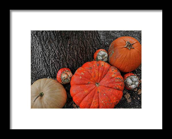 Pumpkin Framed Print featuring the photograph Red Orange by JAMART Photography