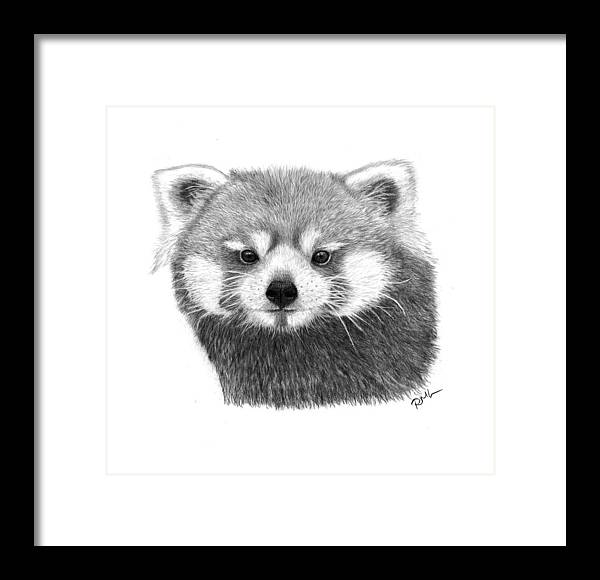 Red Panda Drawings Framed Print featuring the drawing Red Panda by Rosanna Maria