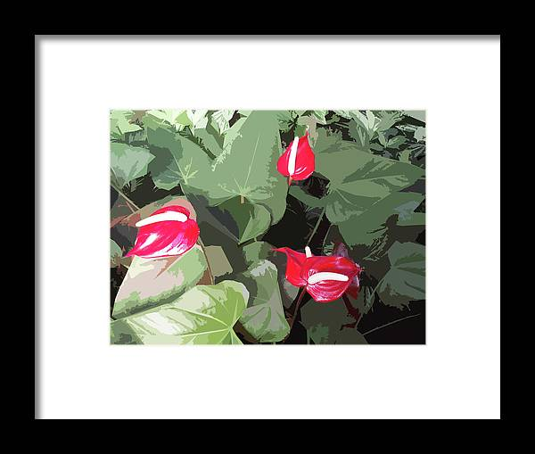 Plant Framed Print featuring the photograph Red Plant by Adina Campbell