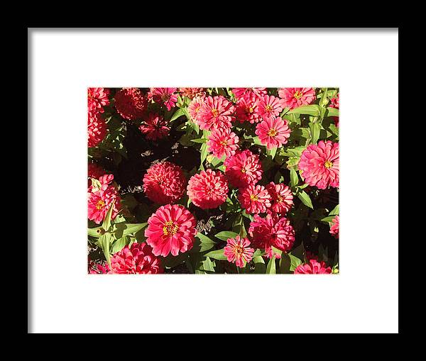 Red Framed Print featuring the photograph Red Pop by Margaret Howieson