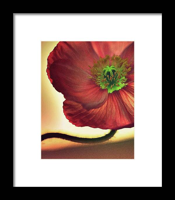 Poppies Framed Print featuring the photograph Red Poppy by Amy Neal