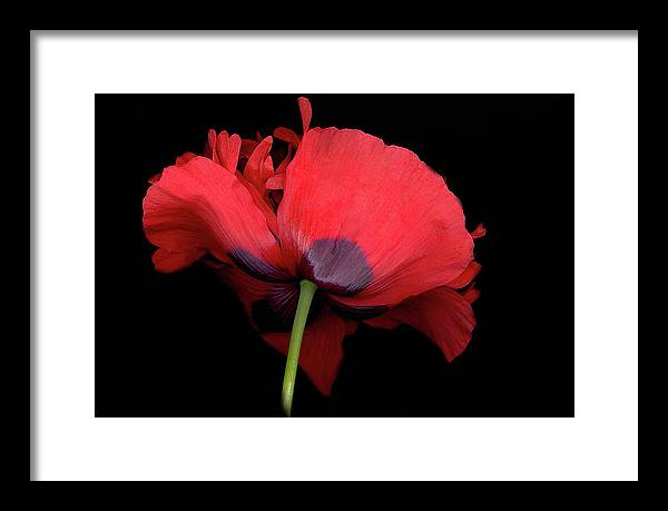 Red Poppy Framed Print featuring the digital art RED Poppy by Sandi F Hutchins