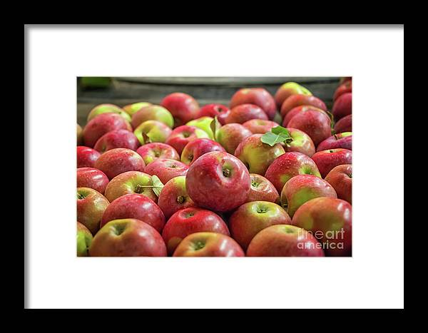 Red Ripe Apples Framed Print featuring the photograph Red Ripe Apples by Elizabeth Dow