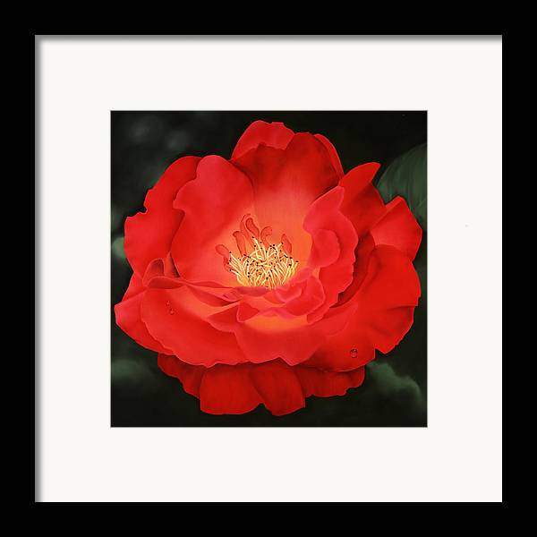 Flower Framed Print featuring the painting Red Rose by Ora Sorensen