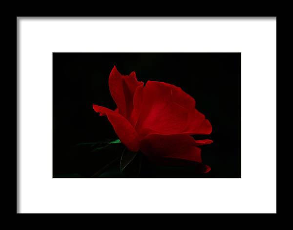 Rose Framed Print featuring the photograph Red Rose by Trudi Southerland