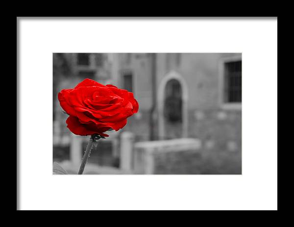 Venice Framed Print featuring the photograph Red Rose with Black and White Background by Michael Henderson