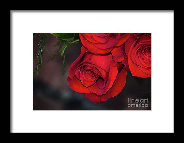 Rose Framed Print featuring the photograph Red Roses by Maxwell Dziku