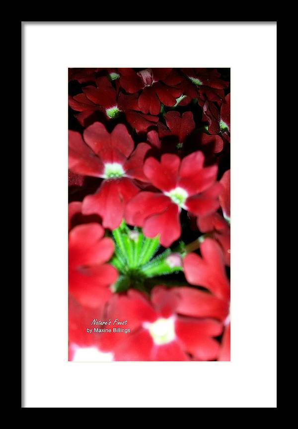 Flowers Framed Print featuring the photograph Red Sea by Maxine Billings
