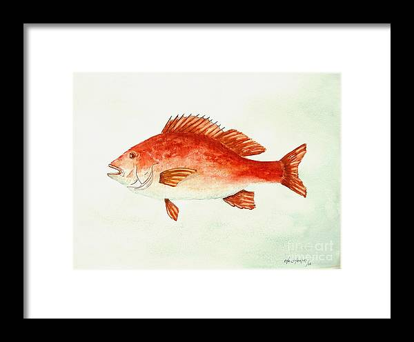 Red Snapper Fish Framed Print featuring the painting Red Snapper by Miroslaw Chelchowski
