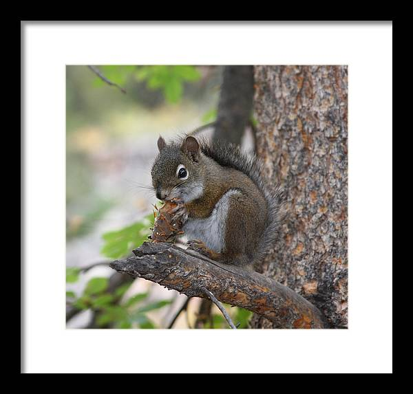 Squirrel Framed Print featuring the photograph Red Squirrel by Doug Johnson