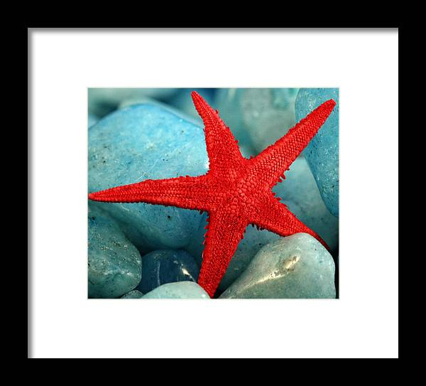 Red Framed Print featuring the photograph Red Starfish by Gina Cormier